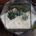 kaktusbahcesi-005
