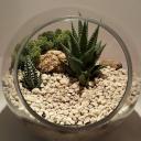 kaktusbahcesi-002